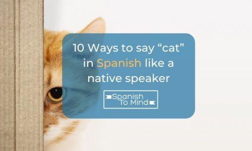 """10 Ways to say """"cat"""" in Spanish like a native speaker"""