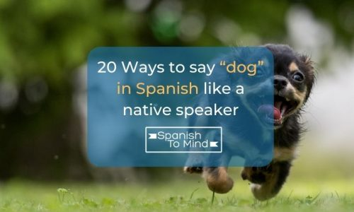 """20 Ways to say """"dog"""" in Spanish like a native speaker"""